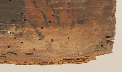 Panneau de bois infesté d'insectes xylophages